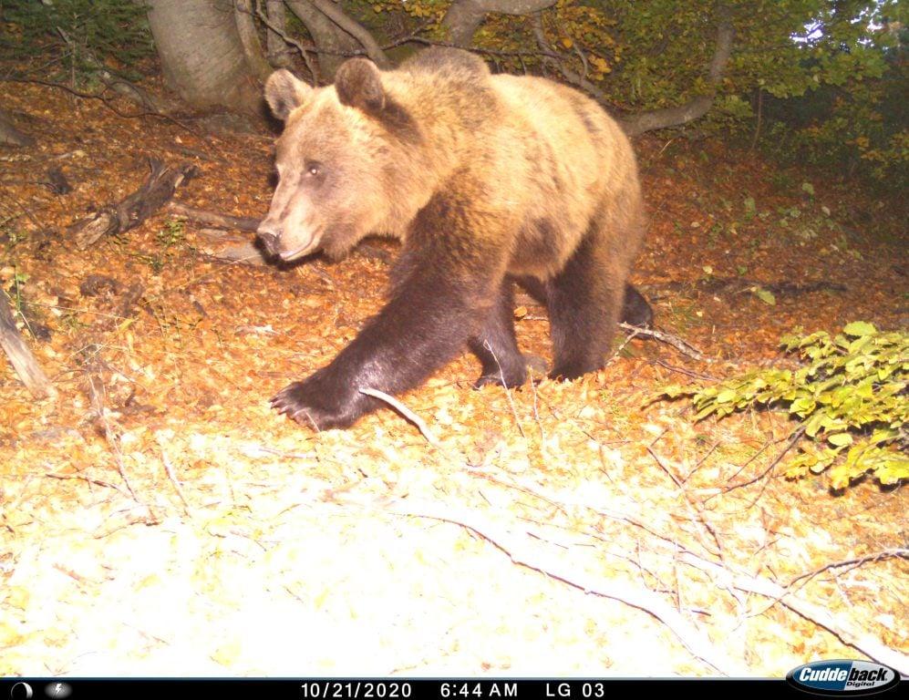 FOTO/ Pasuria natyrore, njihuni me kafshët e egra në zonën e Kukësit